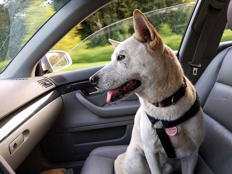 how to get pet hair out of car seats and carpet